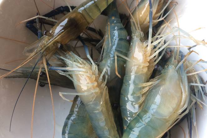 Home Cooking Recipe: Buy home shrimp, soak in clean water for a while, remove shrimp and claws