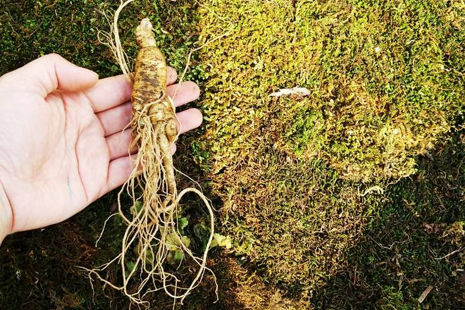 Home Cooking Recipe: Ginseng is washed, rice is washed clean (fresh ginseng pulp water, good nutrition, use a toothbrush to brush some, can not finish, can be placed in the refrigerator, can be dried, put for a long time.)