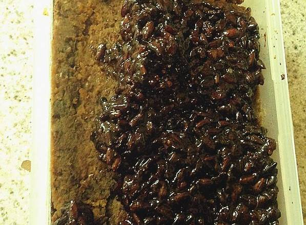 Home Cooking Recipe: Homemade red bean paste (can also be bought directly): Red beans are cooked, broken with a cooking machine, and then smothered with soft rice cooker, be sure to paste the pan, turn it over every other time. I also added red dates to this, and I will cook them together. How much sugar depends on your taste.